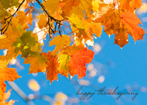 Clear Blue Sky with Fall Leaves Thanksgiving Cards